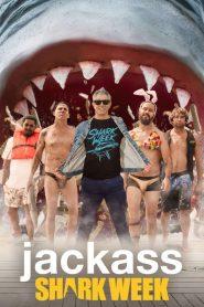 Jackass kontra rekiny pobierz